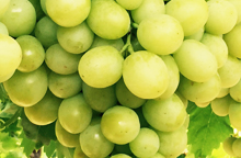 australia table grapes